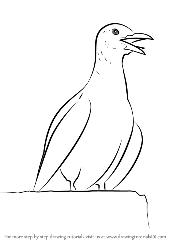 learn how to draw a calling seagull birds step by step drawing tutorials