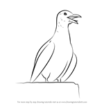 How to Draw a Calling Seagull