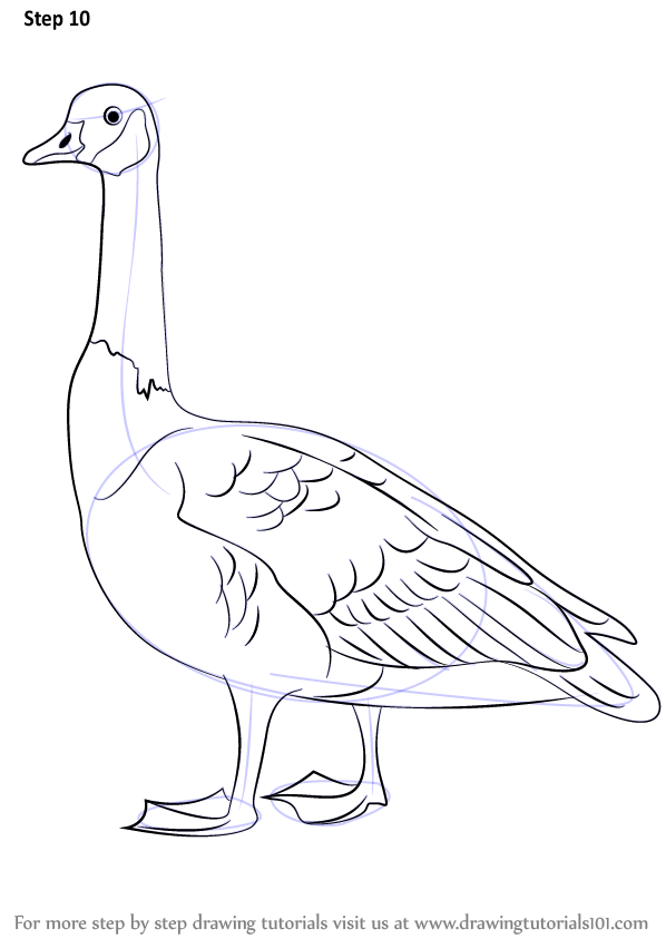 Learn How To Draw A Canada Goose Birds Step By Step