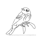 How to Draw a Cape May Warbler