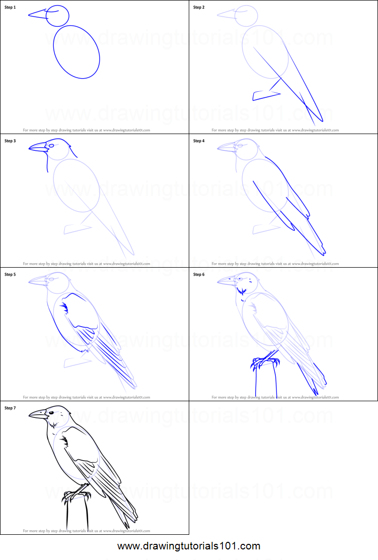 How to draw a carrion crow printable step by step drawing for How to make doodle art
