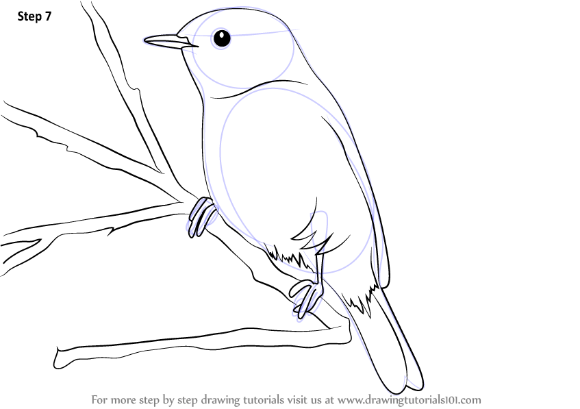 Learn How To Draw A Chiffchaff Birds Step By Step Drawing Tutorials