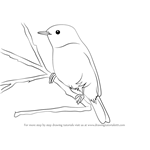 How to Draw a Chiffchaff