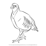 How to Draw a Chukar