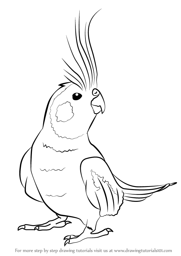 Learn How To Draw A Cockatiel (Birds) Step By Step  Drawing Tutorials