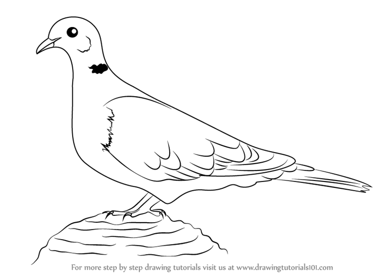 Step By Step How To Draw A Collared Dove Drawingtutorials101 Com