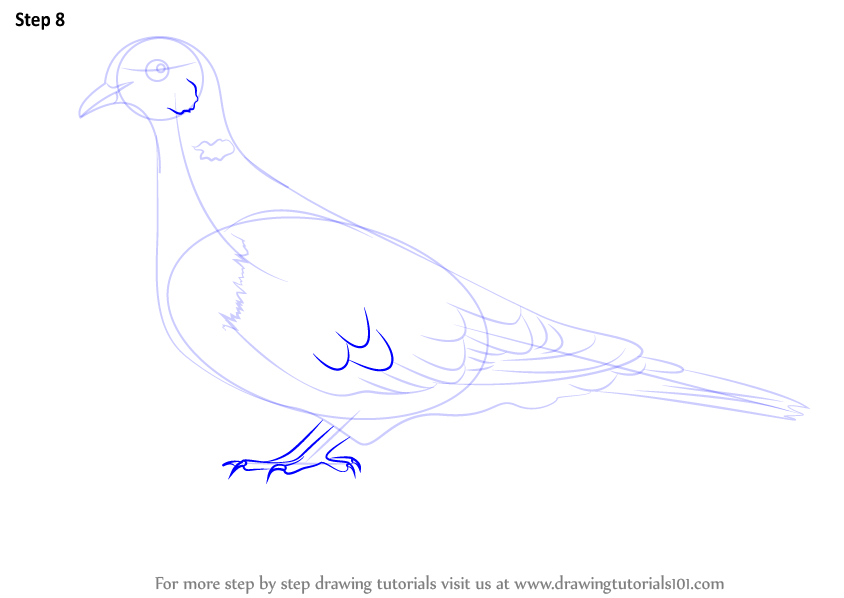 Learn How to Draw a Collared Dove (Birds) Step by Step