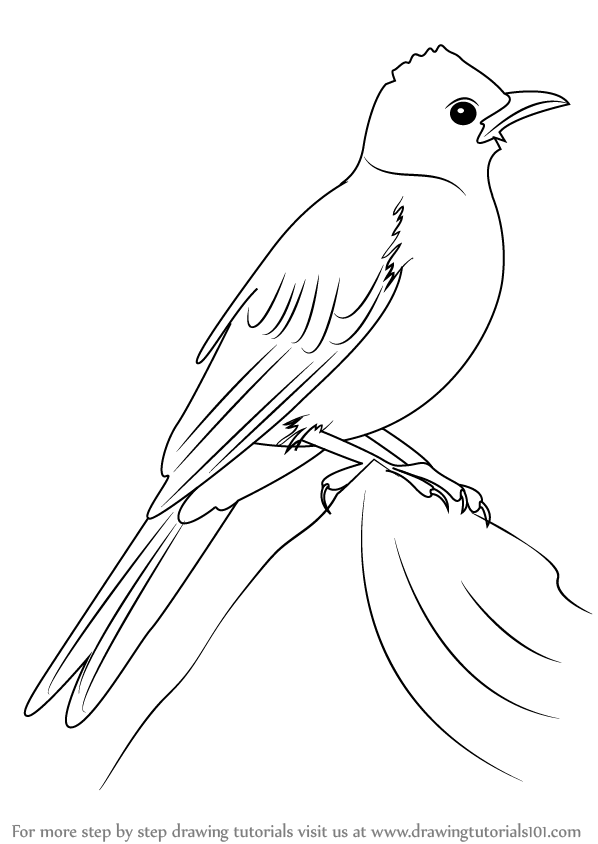 Line Drawing Of Animals And Birds : Learn how to draw a common bulbul birds step by