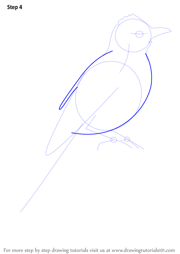 Learn How To Draw A Common Bulbul (Birds) Step By Step  Drawing Tutorials
