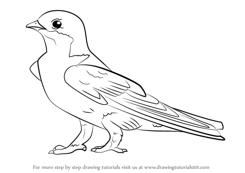 Learn How To Draw A Common House Martin (Birds) Step By Step : Drawing  Tutorials