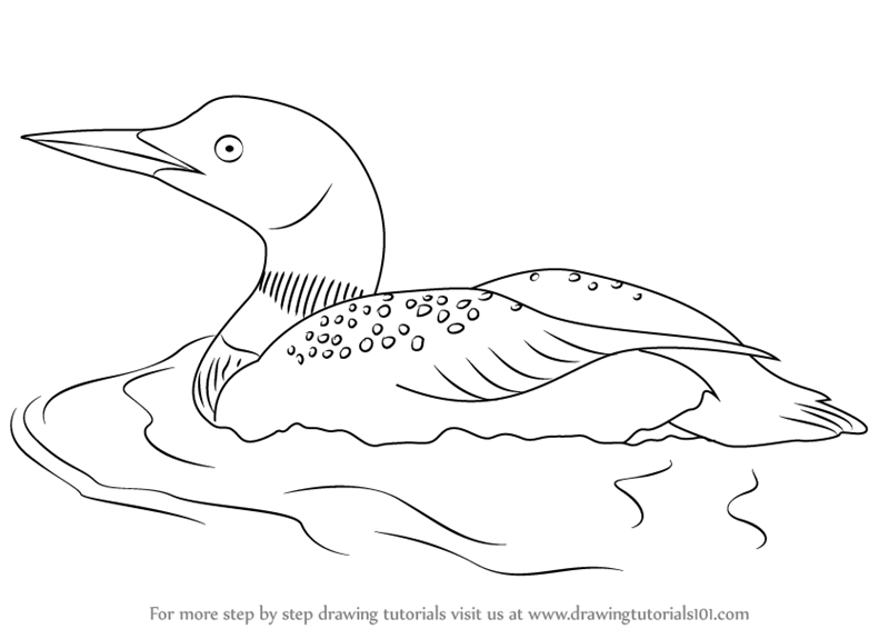 Learn How to Draw a Common Loon