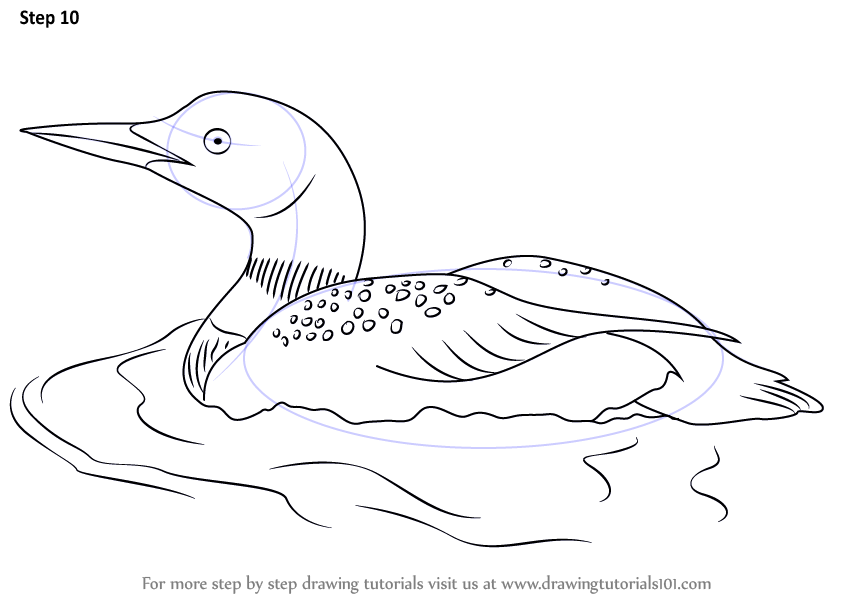 Learn How to Draw a Common Loon (Birds) Step by Step ...