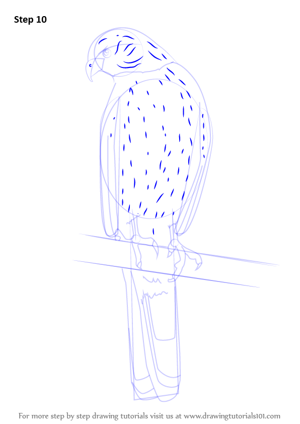 how to draw a kestrel