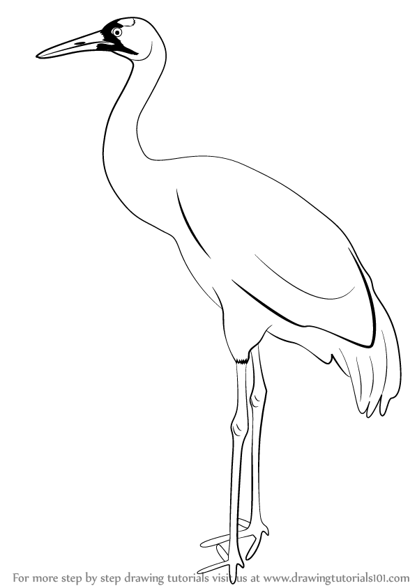 Learn How to Draw a Crane Birds