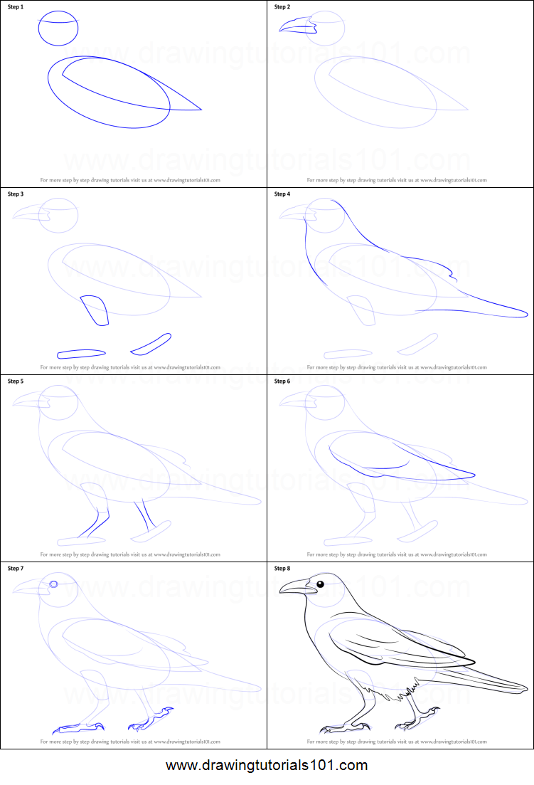 How to draw a crow printable step by step drawing sheet