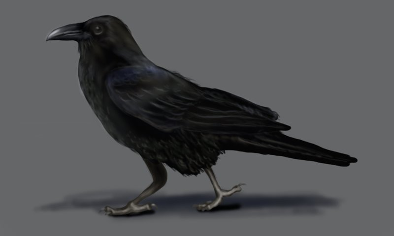 how to draw a realistic crow