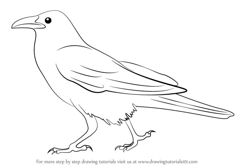 Learn How to Draw a Crow (Birds) Step by Step : Drawing ...