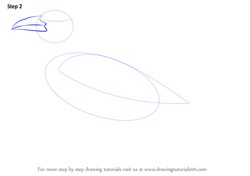 how to draw a crow flying step by step