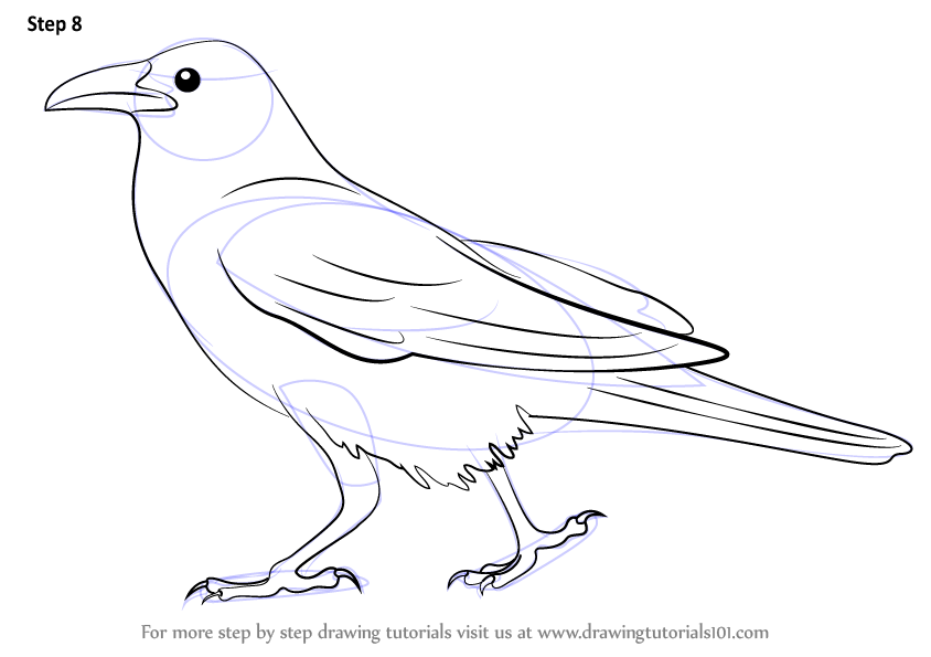 Learn How To Draw A Crow Birds Step By Step Drawing Tutorials