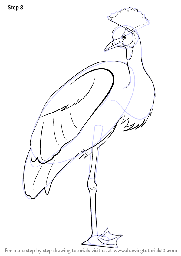 Step by step how to draw a crowned crane for How to draw a crane step by step