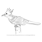 How to Draw a Cuckoo