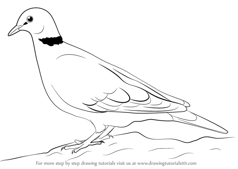 learn how to draw a dove birds step by step drawing tutorials
