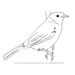 How to Draw a Dunnock