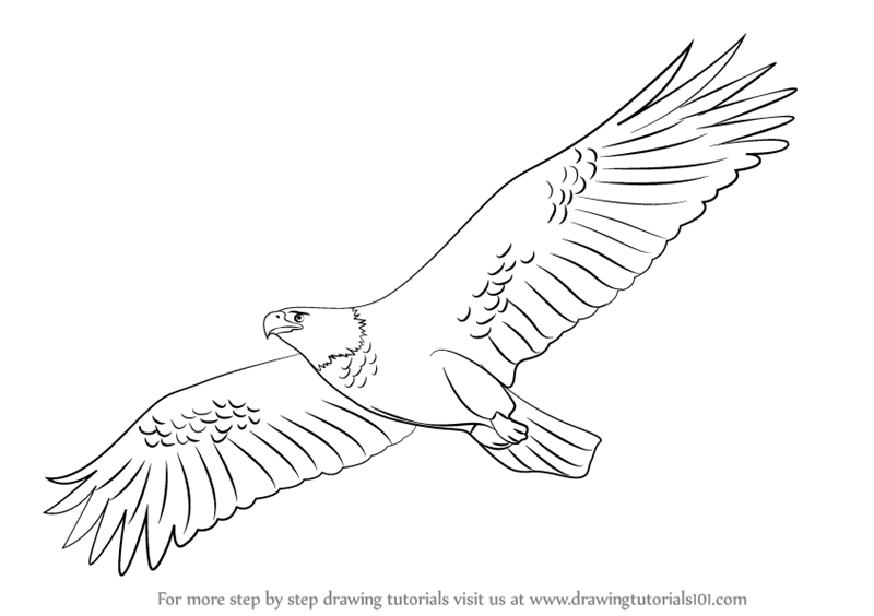 Learn how to draw an eagle flying birds step by step drawing tutorials