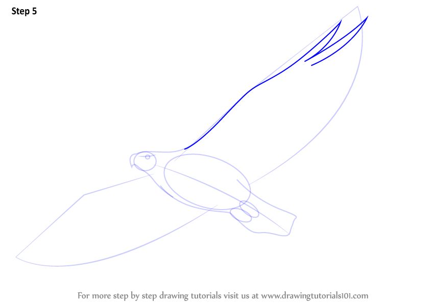 how to draw a eagle step by step for beginners