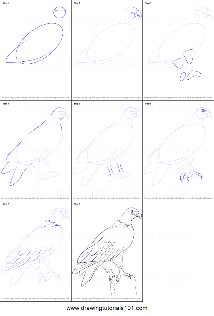 How To Draw A Eagle Body Step By Step
