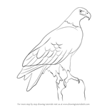 How to Draw a Eagle