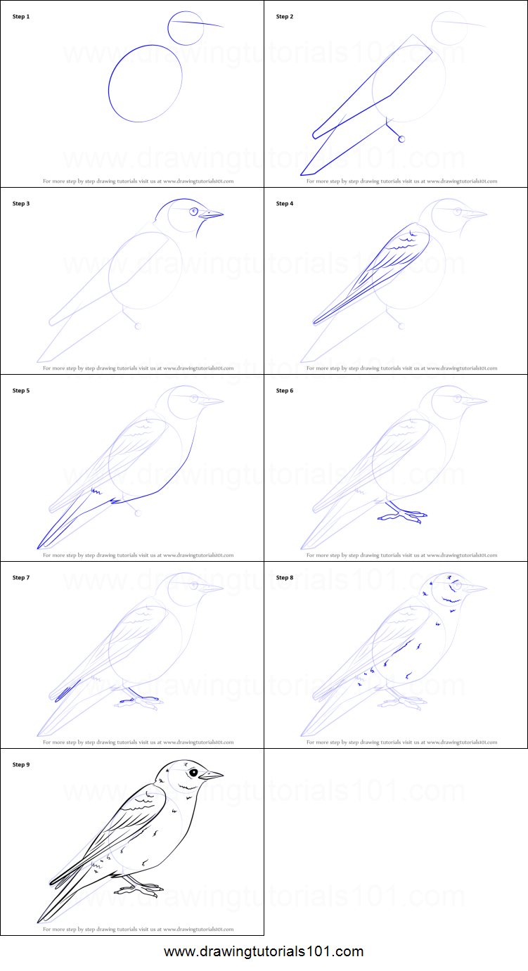 how to draw an eastern bluebird printable step by step drawing sheet drawingtutorials101com