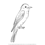 How to Draw an Eastern Kingbird