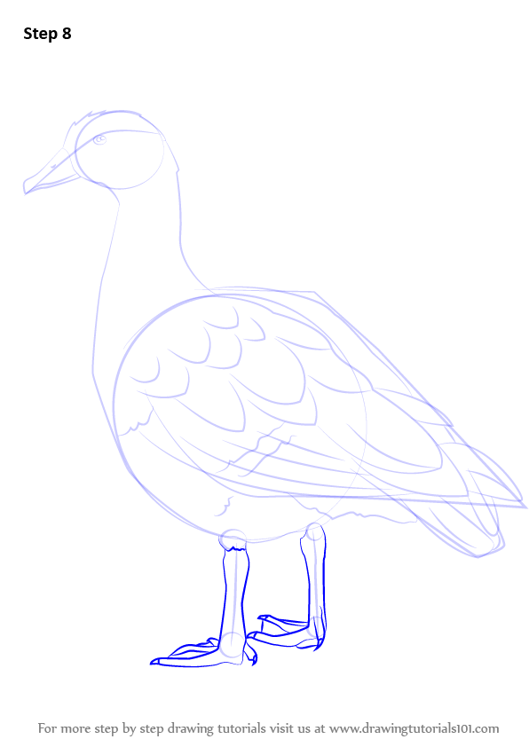 Learn How To Draw An Egyptian Goose (Birds) Step By Step