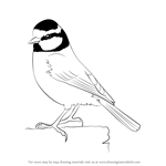 How to Draw a Eurasian Blue Tit