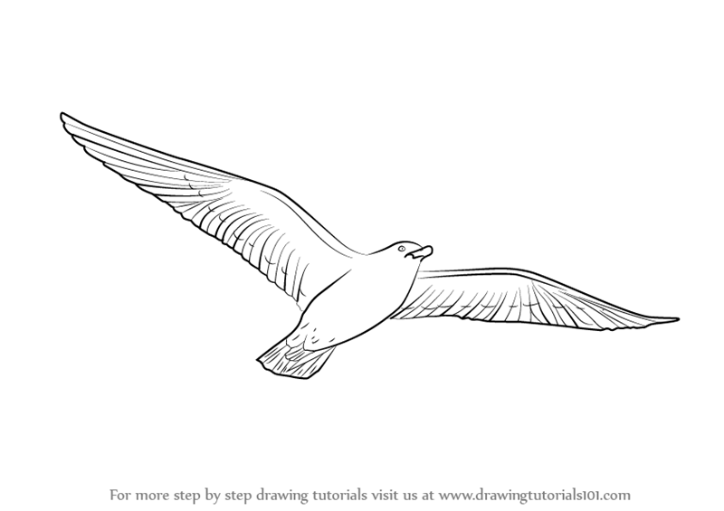 How To Draw Bird Flying