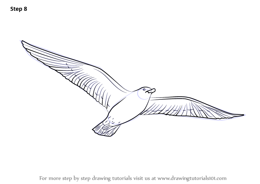 Learn How to Draw a Flying Bird (Birds) Step by Step ...