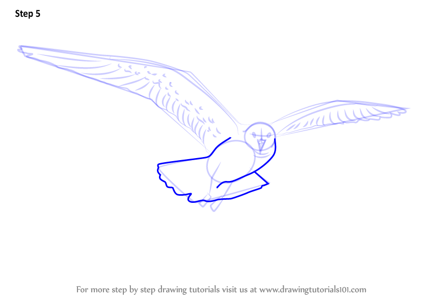Learn How to Draw a Flying Gull