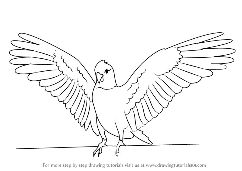Step by Step How to Draw a Galah : DrawingTutorials101.com Batman Drawing In Pencil Easy