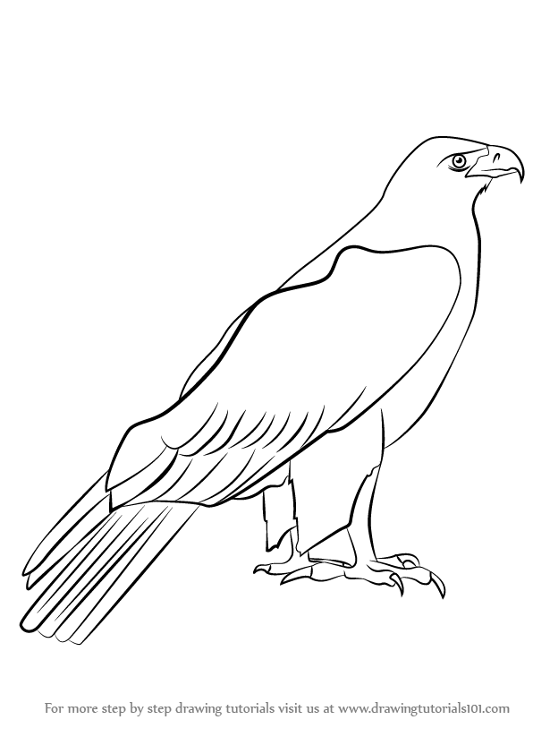 Learn How to Draw a Golden Eagle (Birds) Step by Step : Drawing ...