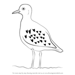 How to Draw a Golden Plover