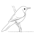 How to Draw a Grasshopper Warbler