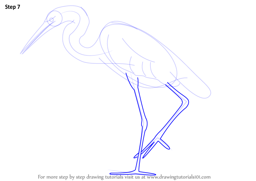 Egret Cartoons: Learn How To Draw A Great Egret (Birds) Step By Step