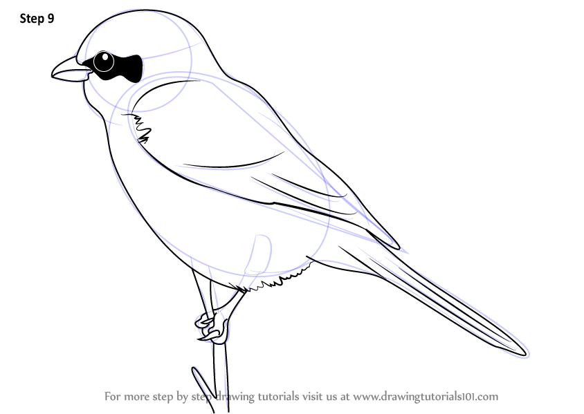 how to draw a fantail