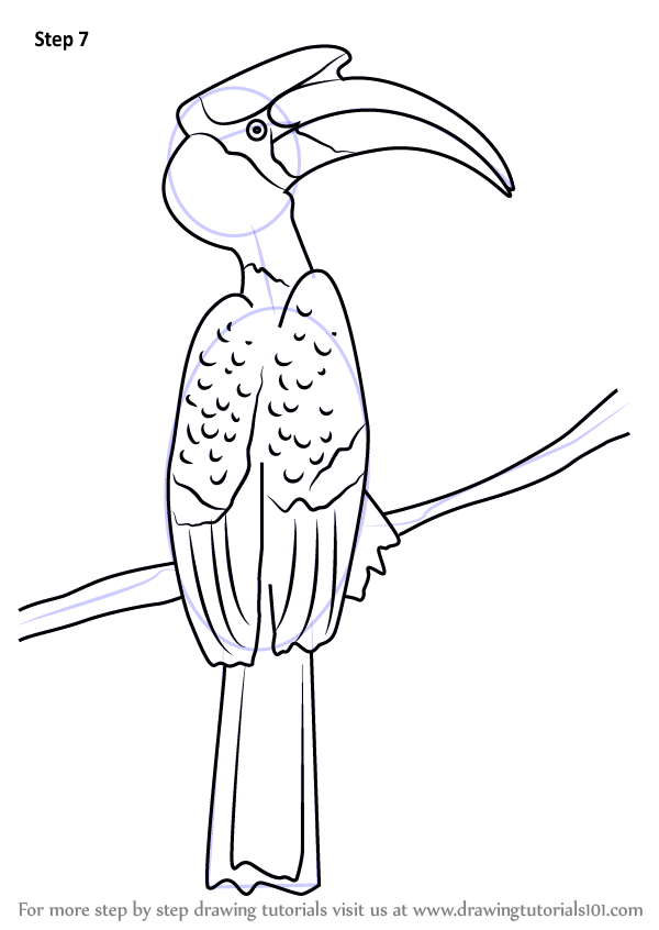 Learn How To Draw A Great Hornbill Birds Step By Step