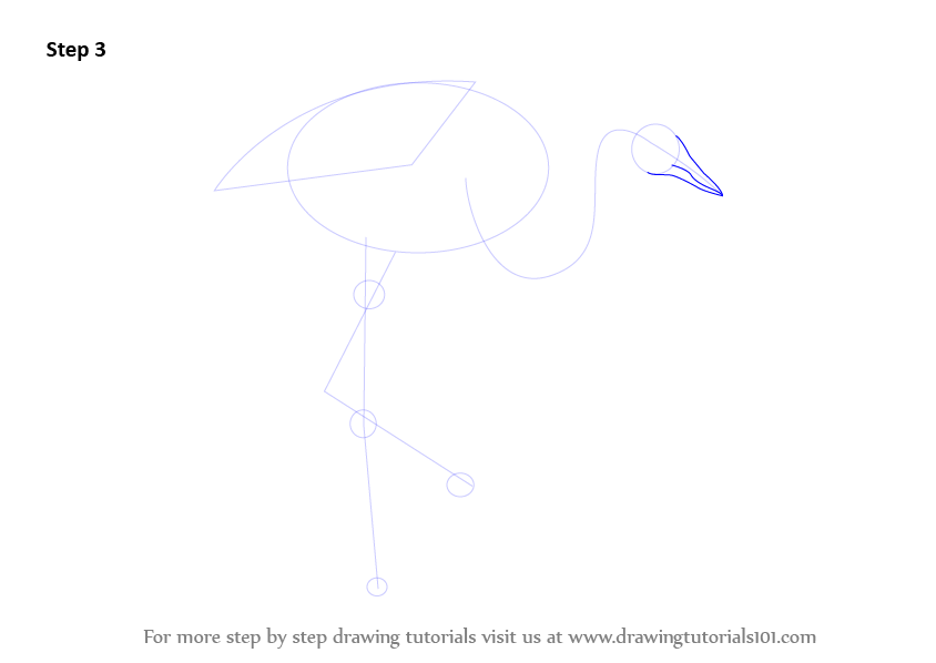 Learn how to draw a grey crowned crane birds step by for How to draw a crane step by step