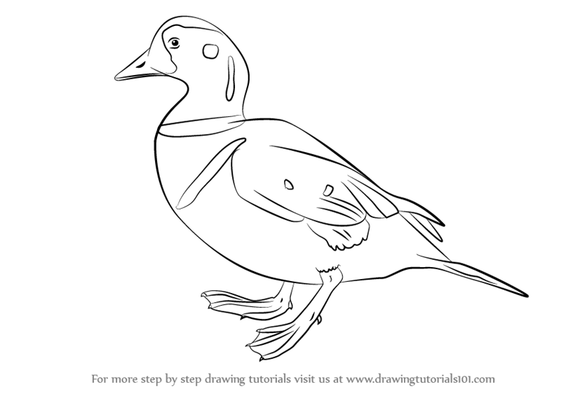 Step By Step How To Draw A Harlequin Duck Drawingtutorials101 Com