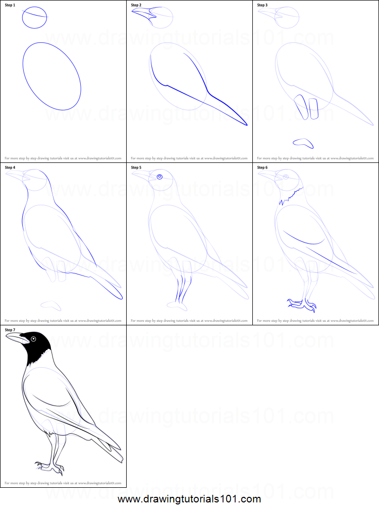 ... crow home drawing tutorials animals birds how to draw a hooded crow