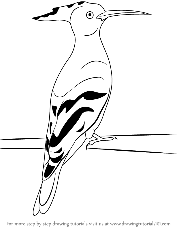 learn how to draw a hoopoe  birds  step by step   drawing