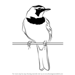 How to Draw a Horned Lark